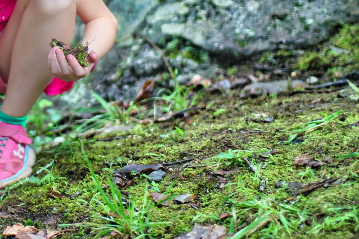 collecting moss in nature