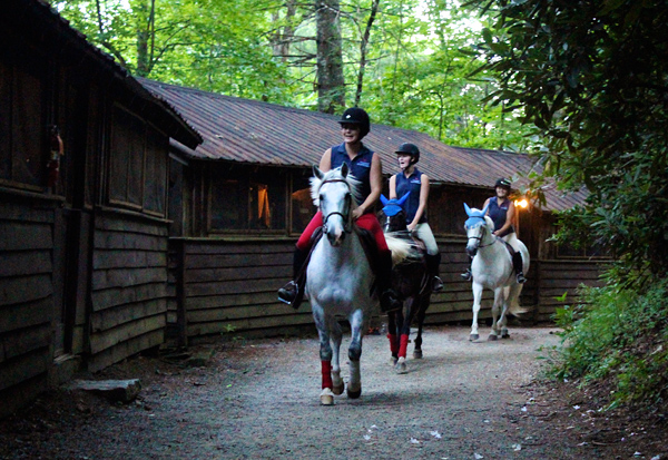 Campers awoken by horses near their cabins