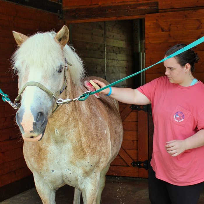camp horse care grooming